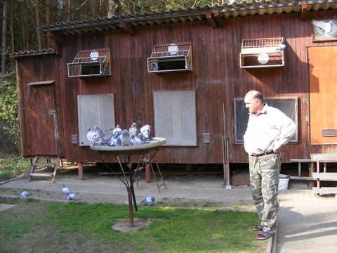Tarácski a dúca előtt füröszti madarait.